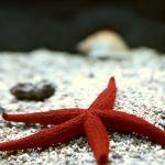 Regeneration - Starfish - Carol Sanford
