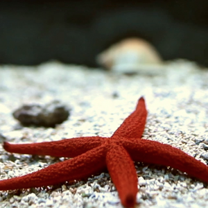 Regeneration - Starfish - Carol Sanford