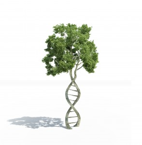 dna tree top